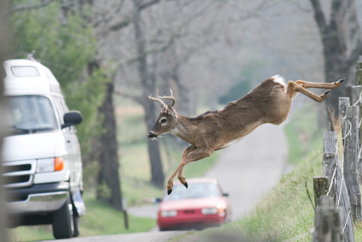If you hit a deer, call Paule Towing.