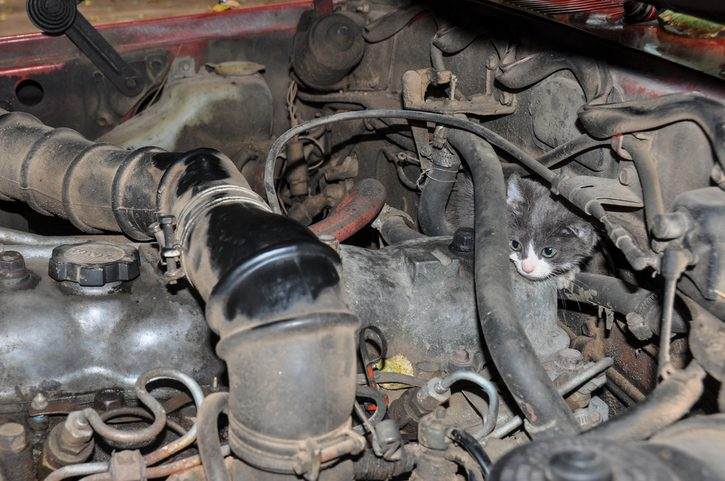 Kitten in engine bay, shows hazard of unused car. Road distractions lead to emergency roadside assistance